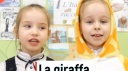 Итальянское видео на тему «Животные»